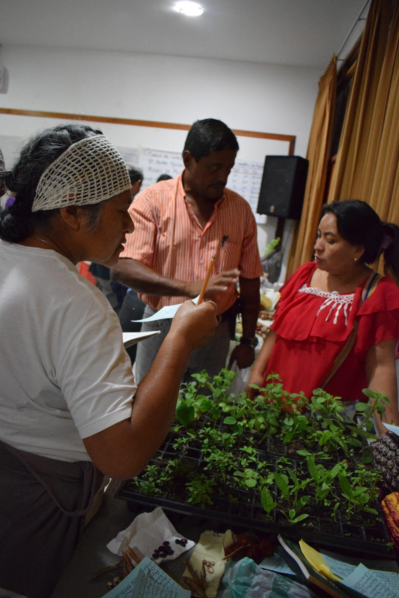 intercambio de semillas III
